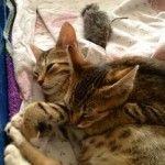 Katzenpaerchen