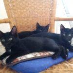 Ziegenhagen Spencer, Tracy und Luzy klein